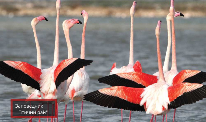 Заповедник Птичий рай